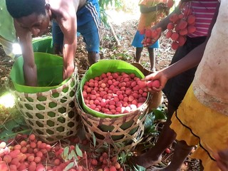 Diversification et transformation de fruits à Ampasimbe Onibe